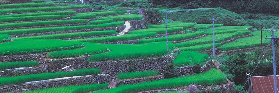 shimane image(4)