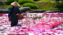 Daikon-shima and Yuushien Garden